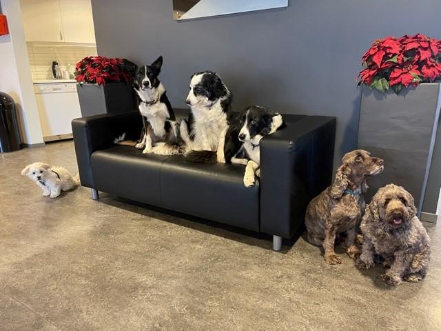 Hundene på Aker Lås