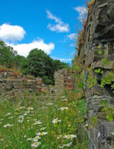 Blomsterprakt ved ruinene av Cistercienserklosteret på Hovedøya